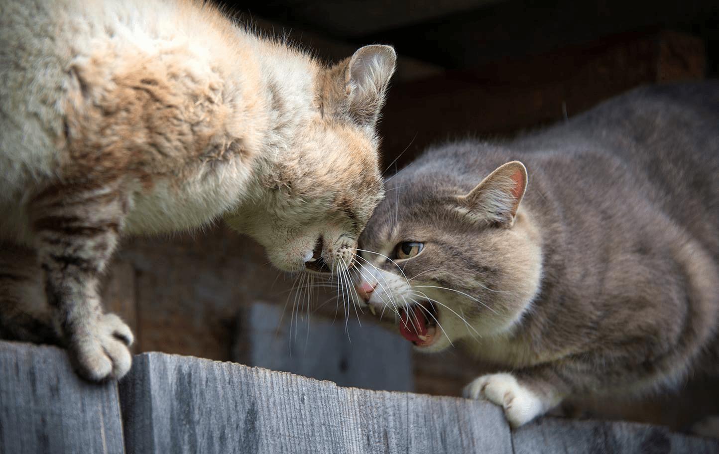 Смешные картинки про бой