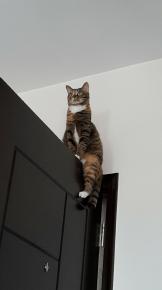 Кошка сидит на двери