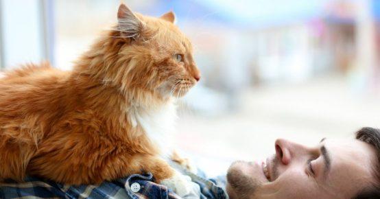Кот лежит на мужчине