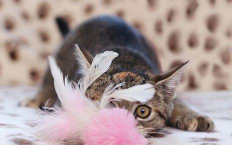 Кошка лежит с игрушкой