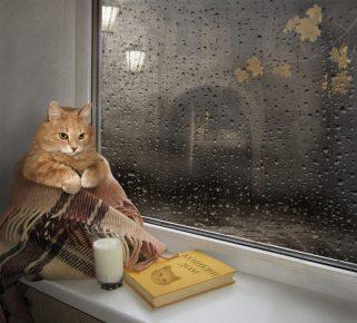 Кот сидит на подоконнике