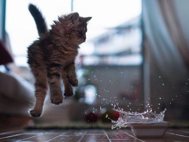 Котёнок и брызги воды