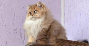 Кот на полке