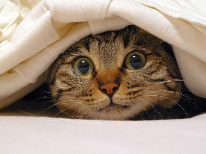 Почему кошка гадит и писает на кровать человеку