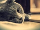 Почему кошка уходит умирать из дома