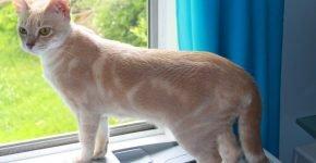 Золотой мраморный мист стоит у окна
