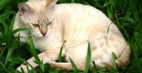 Золотой пятнистый мист лежит в траве