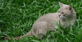 Лиловый пятнистый мист на траве
