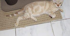 Персиковый мраморный мист лежит на полу