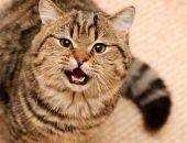 Что влияет на поведени е кошки