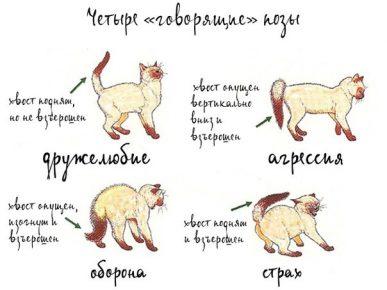 Язык тела кота