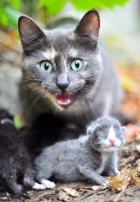 Кошка защищает котёнка
