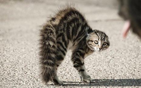У кошки спина дугой