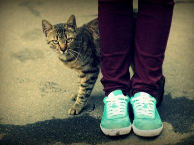 Кошка трётся о ноги человека