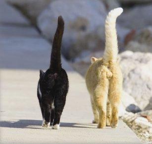 У котов хвосты трубой