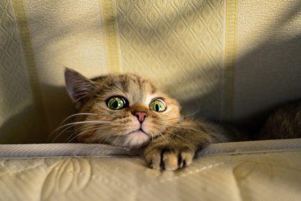 Кот за диваном