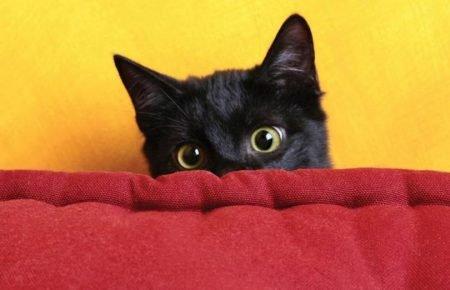 Чёрный кот прячется