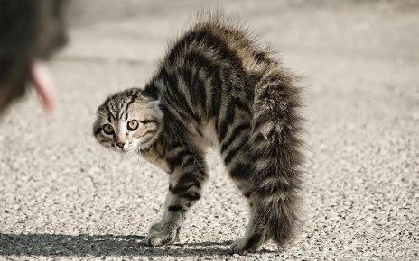 Испуганный кот на улице