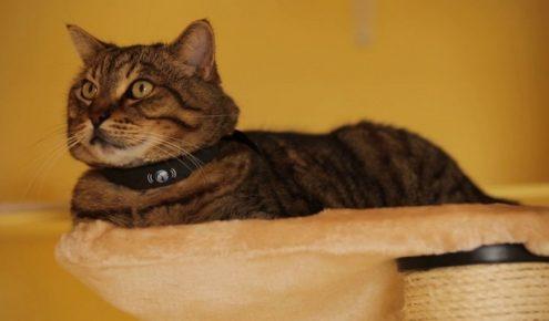Кот с GPS-ошейником