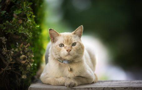 Кошка с GPS-ошейником на улице