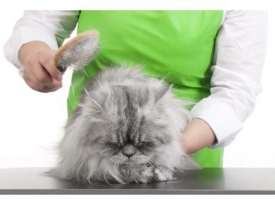 Руки человека расчёсывают кошку
