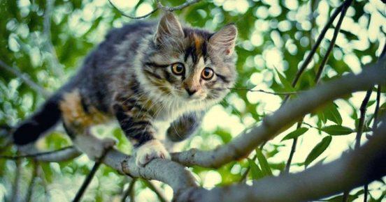 Кошка смотрит на добычу