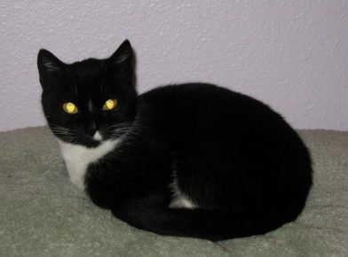 Свечение глаз кошки в темноте