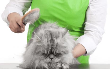 Кошку расчёсывают
