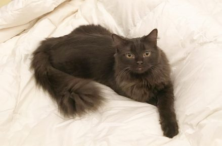Йоркская кошка лежит на постели