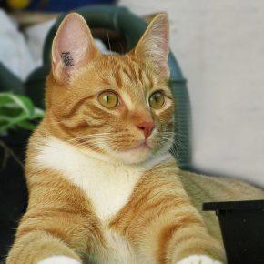 Клеймо у кошки