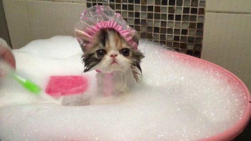 Котёнок в шапочке для купания