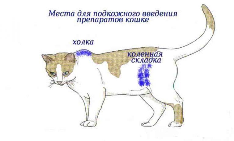 как поставить укол кошке в мышцу