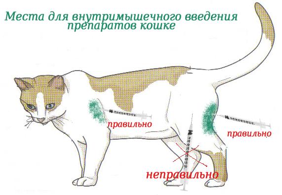 укол котенку внутримышечно