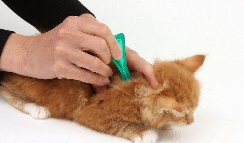Человек наносит лекарство на холку кота