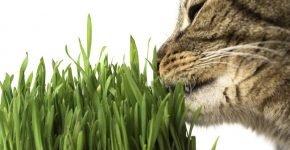 кот ест овёс