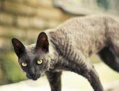 Худой кот