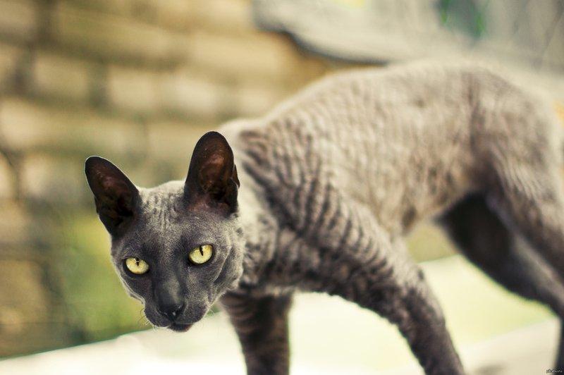 Очень худой кот как его откормить