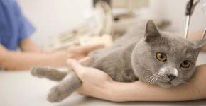 Капельница кошке в холку