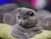 Кот с мутацией