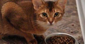 Кошка и корм