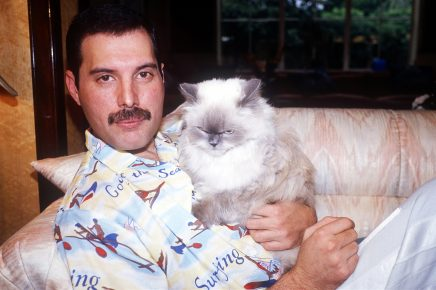 Фредди Меркьюри с котом