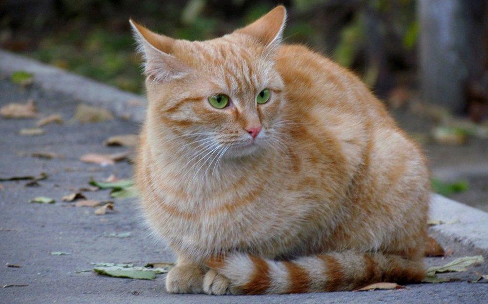 Image result for беспородные кошки