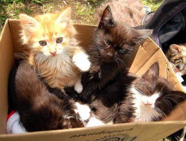 Котята на рынке
