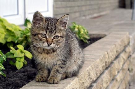 Здоровый беспородный котёнок