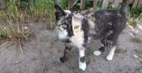 Пятнистый уличный кот