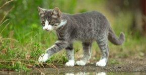 Котёнок с белыми лапами