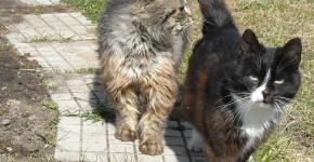 Два уличных кота