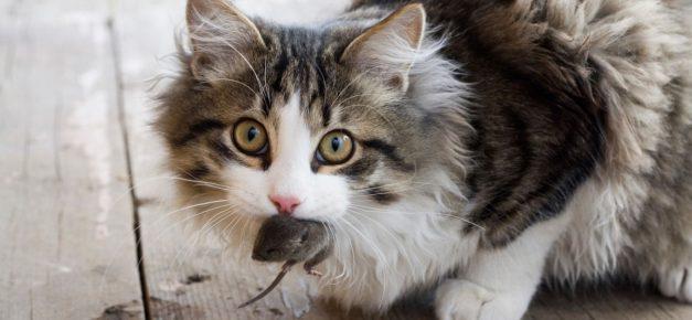 Кошка с мышью