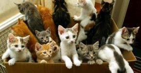 беспородные уличные кошки