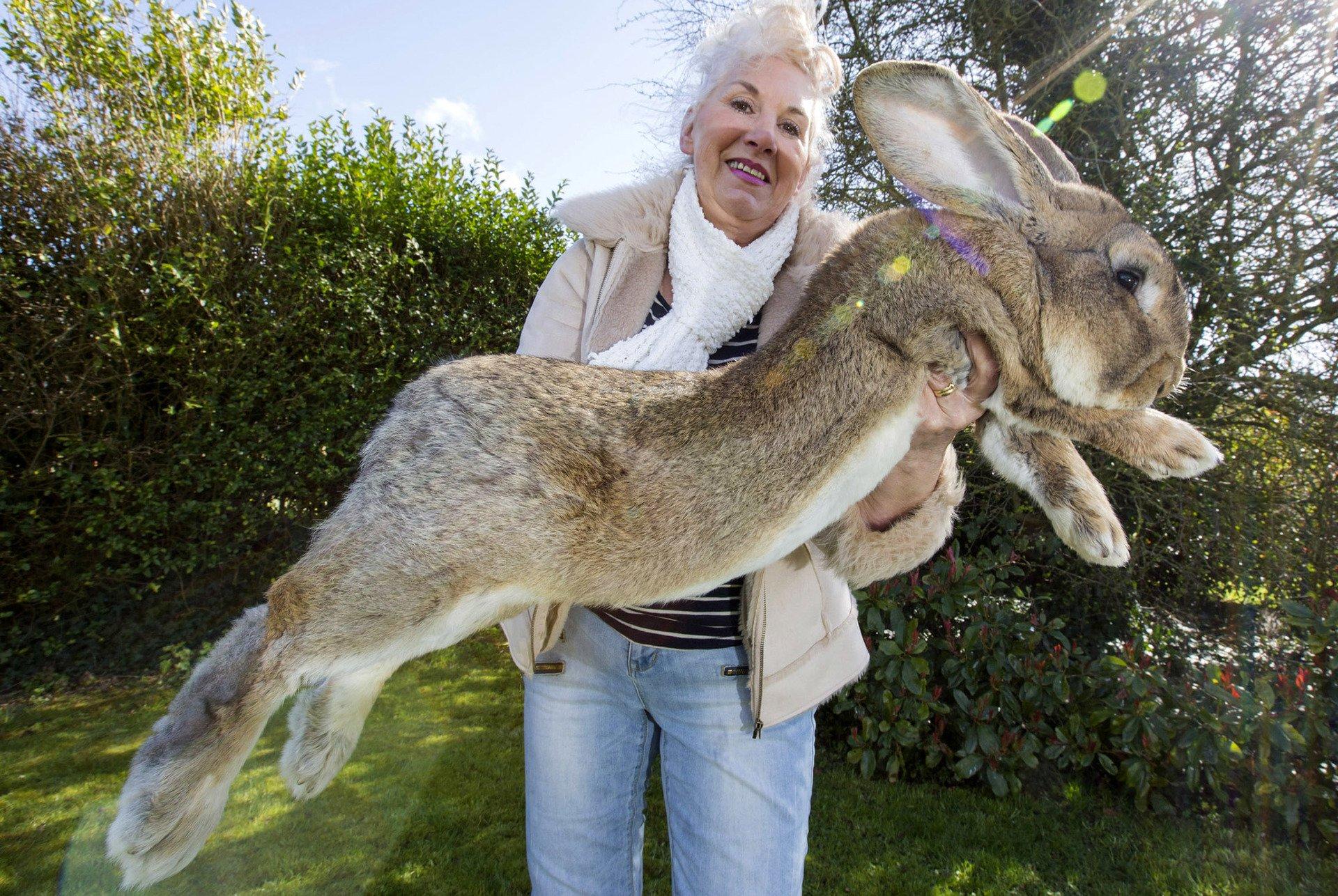 картинки кроликов гигантских